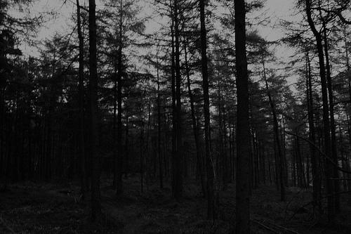 black-and-white-creepy-dark-scary-woods-Favim.com-450665