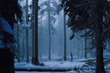 The Wishing Forest Jamie Grefe Rene Perez